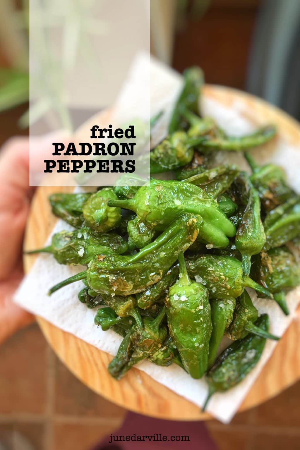 Fried Padron Peppers (Pimientos de Padron)