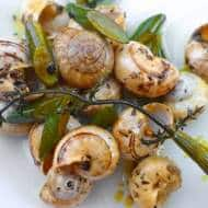 Snails in Malta & Where to Find Them (Marsaskala)